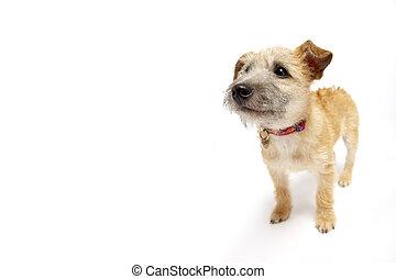 lille hund, beliggende