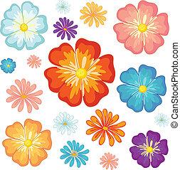 lille, stor, blomster