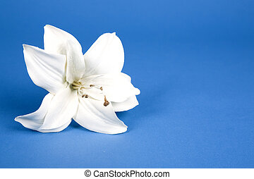 lilly, artificiel
