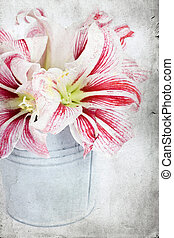 Lilly flowers in a bucket