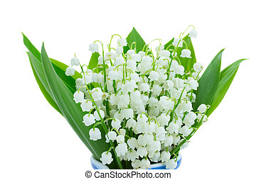 lilly of the valley blooming posy isolated on white background