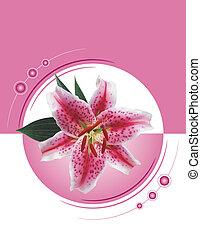 lilly, stargazer