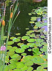 Lillypads and Cattails - A garden pond filled with green...