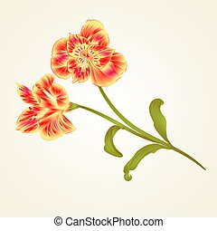 Lily Alstroemeria stem flower and leaves closeup isolated...