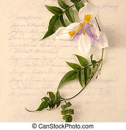 fortnightly lily with jasmine vine on a old-style handwriting background