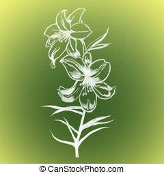 lily - Sketch of lily flowers in black and white colors