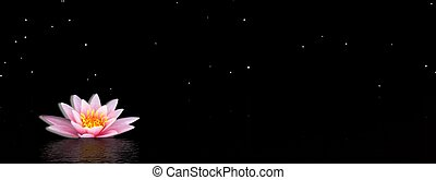 Lily flower by night