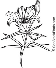 Lily flower - Contour black-and-white image lily flower and...