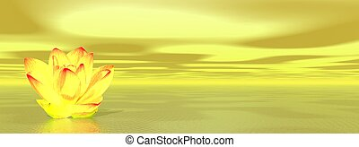 Lily flower in yellow ocean - Yellow lily flower in ocean to...