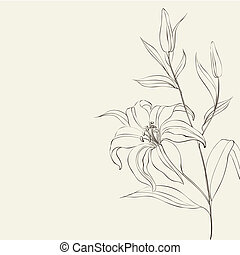 Lily flower isolated over white. illustration