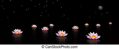 Lily flowers by night