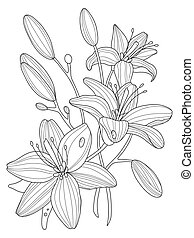 Coloring Book Antistress For Adults Psychotherapy Lily Flowers Vector Illustration