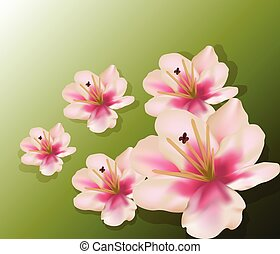 Lily flowers composition