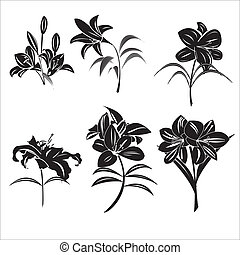 Lily flowers in vecter graphics