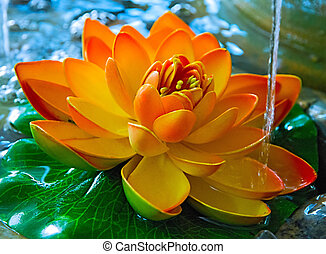 lily in water on the lake