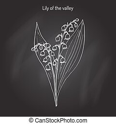 Lily of the valley Convallaria majalis . Hand drawn...