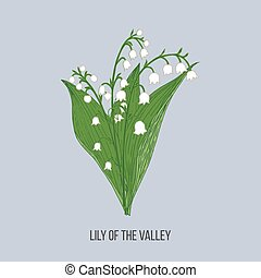Lily of the valley Convallaria majalis . Hand drawn botanical vector illustration