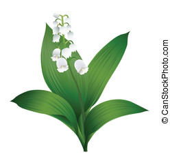 Lily of the Valley - A vecror image of a spring-flower