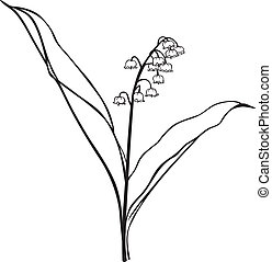 Lily of the valley flower - Contour black-and-white image...