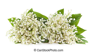 Lily of the valley isolated on a white background