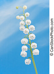 Lily of the valley on a blue sky