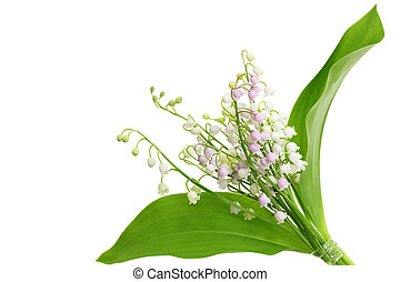 Lily of the Valley - Lily of the valley isolated on white...