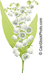 Lily of the Valley - Spring flowers lily of the valley...