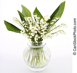Lily of the valley flowers on white background