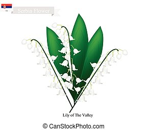 Lily of The Valley, The National Flower of Serbia - Serbia...