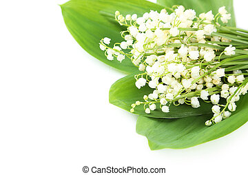 Lily of the Valley with leaves on a white background