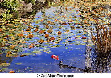 Lily Pads Canadian Flag Fall Colors Leaves Reflection Van Dusen Gardens Vancouver British Columbia, Canada