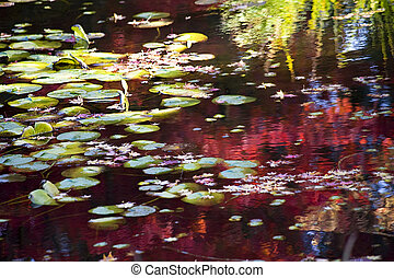 Lily Pads Fall Colors Water Reflections Van Dusen Gardens Vancou