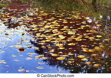 Lily Pads Fall Colors Water Reflections Yellow, Green Red Blue Van Dusen Gardens Vancouver British Columbia Canada