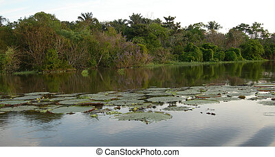 Lily pads in lagoon