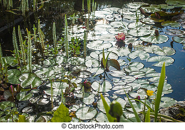 Lily pads on the surface of a large garden pond
