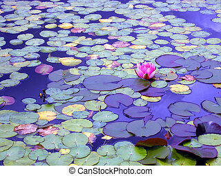 lily pond at twilight with nature creating a great...