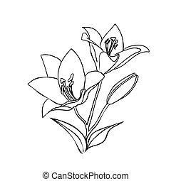 Lily sketch.