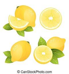 limón, fruta cítrica, vector, colección, fruta, realista, fresco, hojas, aislado, set., ilustración, rebanada, jugoso