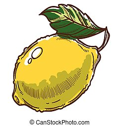 limón, orgánico, ingrediente, fruta, cidra, hoja, vector