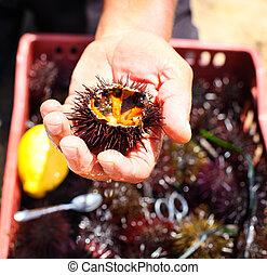 limón, tenencia, mar, él, hombre, comida, pilluelo