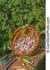 Lima beans in a basket.