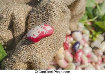 Lima beans in burlap bag