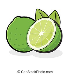 Lime Fruit - Vector illustration of a juicy lime fruit