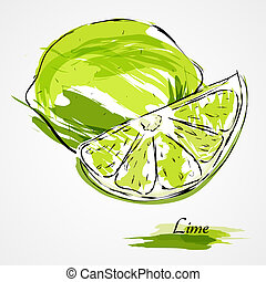 Lime fruit - Hand drawn vector lime, citrus fruit on light ...