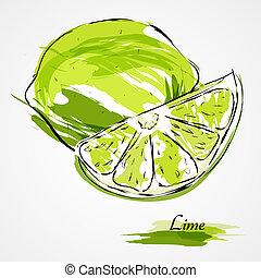 Lime fruit - Hand drawn vector lime, citrus fruit on light ...
