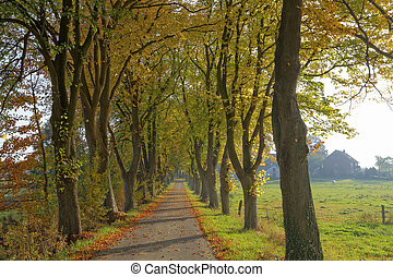 Lime grove in autumn in Germany - Lime grove in autumn in...