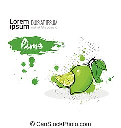 Lime Hand Drawn Watercolor Fruit On White Background With Copy Space