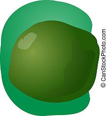 lime illustration - Sketch of whole fresh lime, fruit...