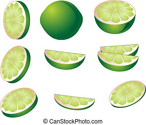 Lime illustration - Lime fruit illustration whole and cut...