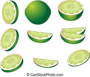 Lime illustration - Lime fruit illustration whole and cut...